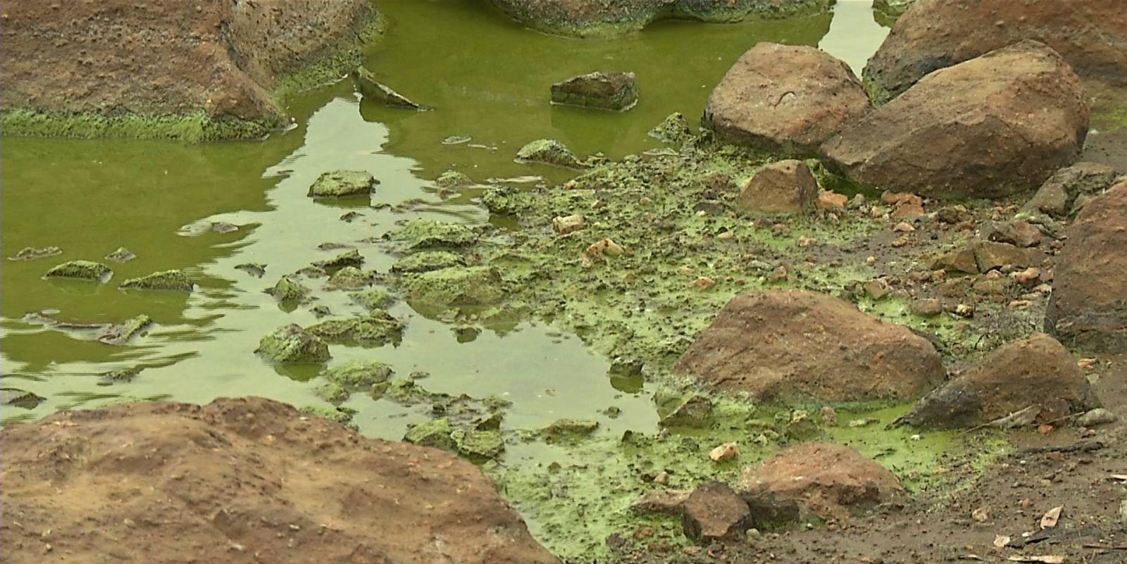 1530799439 34 vaal dam algae2
